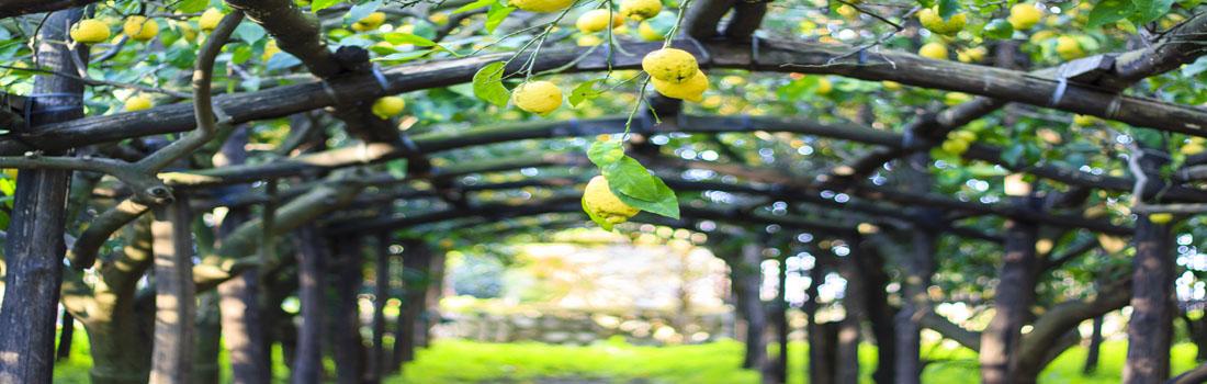 Sorrento bezienswaardigheden lemon